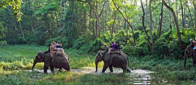 Jungle Safari 3 days